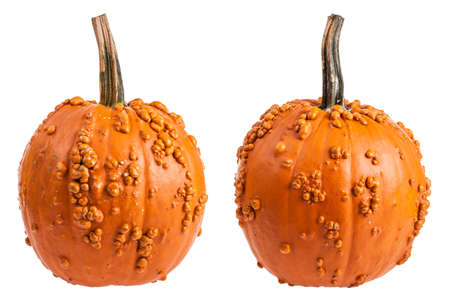 Warty bumpy orange pumpkin front and back isolated on a white background