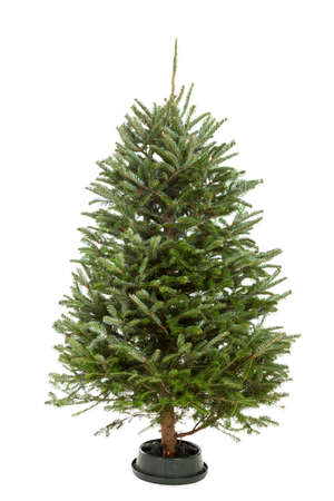 Small undecorated bare Christmas tree isolated on a white background