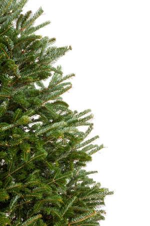 상록 크리스마스 트리의 부분 확대 사진에는 장식 화이트에 격리 없습니다로 스톡 콘텐츠