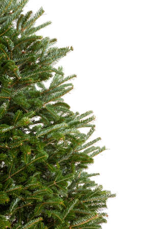 Closeup of part of an evergreen Christmas tree with no decorations isolated on white Standard-Bild