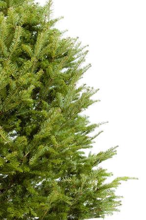 christmas backgrounds: Real bare Christmas tree border isolated on white background Stock Photo
