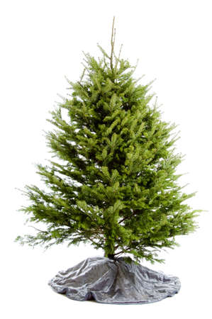 real: Real Christmas tree with silver tree skirt isolated on white
