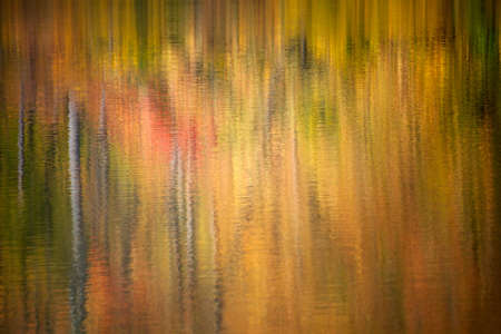 yellow trees: Abstract water reflecting trees in autumn with colorful red,yellow and green leaves