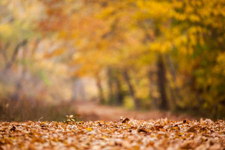 changing colors: Leaves changing colors and falling during autumn at a park Stock Photo