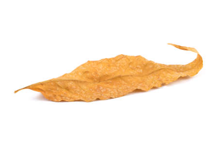 Yellow leaf of isolated on a white background