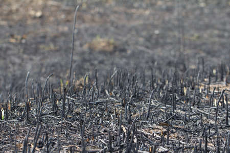 Burned grass field after fire photo