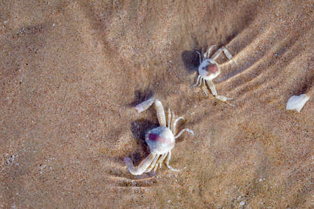 Close up of White crabs washed out at shors Imagens