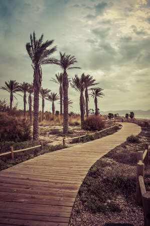 wooden path by the seaside and palm trees to take sunbathing and walk