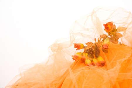 Yellow Dream: Relaxing Warm Artistic Background Arrangement photo