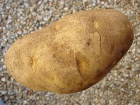 russet potato: Russet Potato Stock Photo