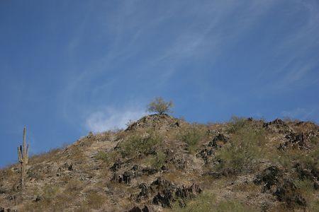 Desert Mountain with Saguaro Cactus and Ironwood Tree Stock Photo - 360498