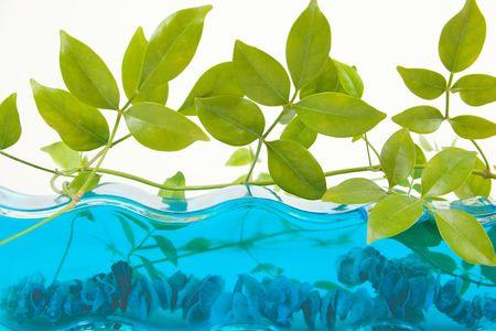 Aquarium Decor with plant and shells