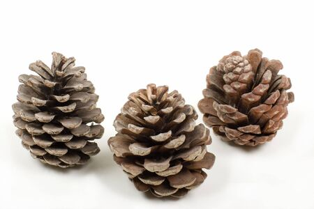 pine three: Three Weathered Pine Cones, on white