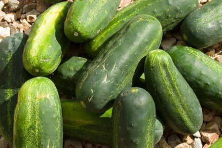 cucumbers: Green Summer Cucumbers Pile Stock Photo