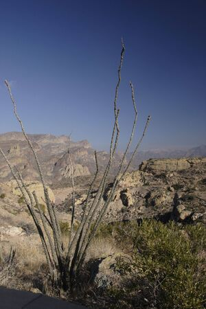 Ocotillo Cactus above Apache Trail; Arizona in Winter. Stock Photo - 692787