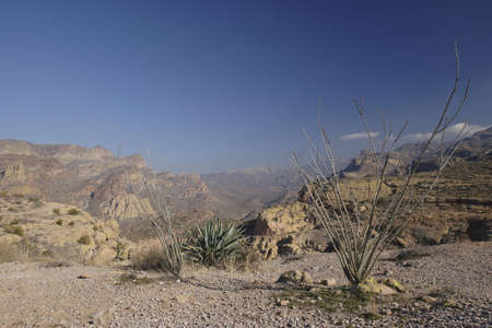 ocotillo: Ocotillo and Agave Cactus above Apache Trail; Arizona in Winter
