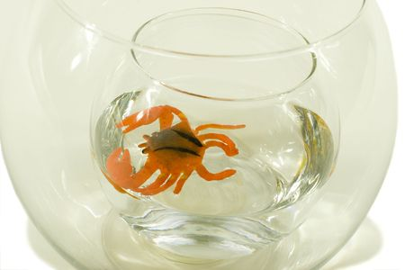 Artificial crab in aquarium, demonstration of water absorption by plastic material; on white with light shadow