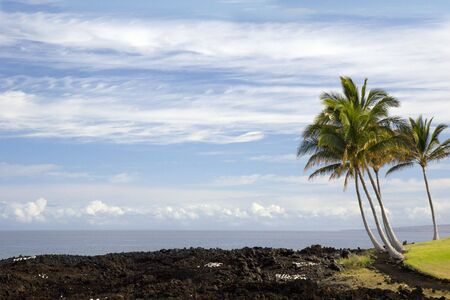 Volcanic Lava and Palms on Pacific Coast of Kona Island, Hawaii photo