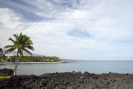 Volcanic Lava and Palms, Pacific Coast of Kona Island, Hawaii photo