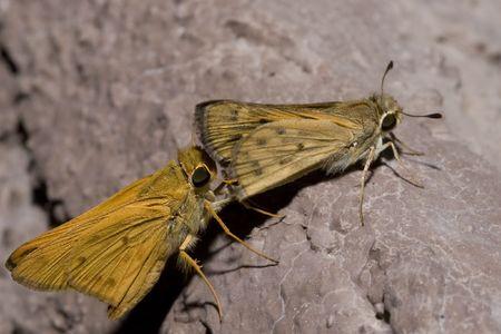 procreation: Garden Moth Procreation Ritual on Stucco House Wall