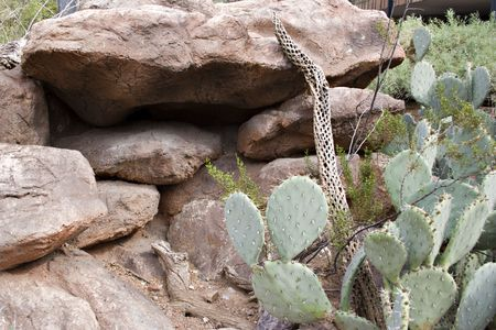 thrifty: Natural Water Thrifty Desert Landscaping in Phoenix, Arizona