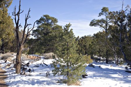 Evergreen Tree Forest in Winter Snow under Blue Sky Stock Photo - 2322785