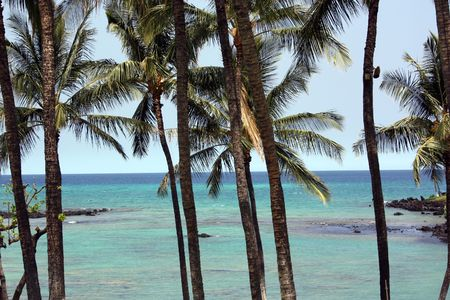 Palm trees over Pacific Ocean; Hawaii, Kona Island