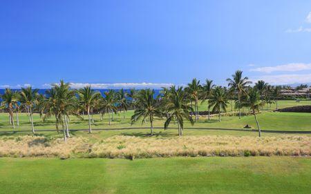 Golf Field in Hawaii Palm Grove, Coast of Kona Island photo
