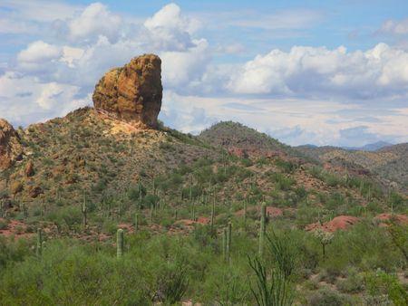ocotillo: Arizonan Saguaro, Cholla and Ocotillo Cacti in Lost Dutchman State Park