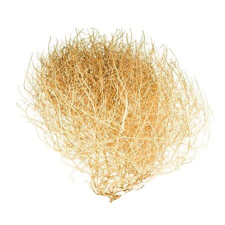 Tumbleweed; isolated on white