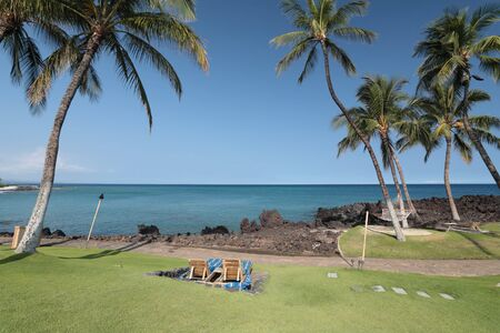 Coast of Kona Island with Palms on Black Volcanic Lava Soil, HI 写真素材