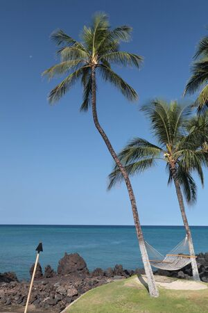 kona: Coast of Kona Island with Palms on Black Volcanic Lava Soil, HI Stock Photo