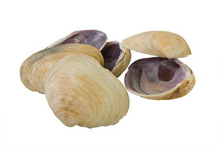 mollusk: Big Mollusk Shells for Gourmet Food Serving