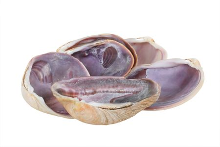 mollusk: Big Mollusk Shells for Gourmet Food Serving; isolated clipping path