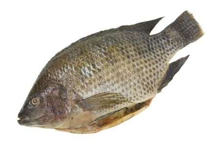 Fresh tilapia fish; isolated, clipping path included photo