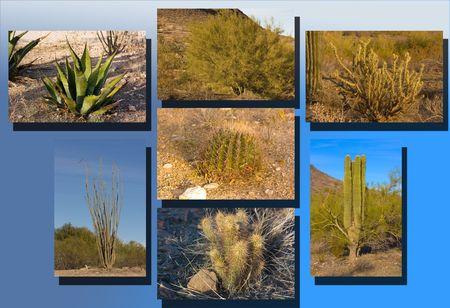 Arizona winter desert vegetation with cacti, bushes and trees Stock Photo - 6149838