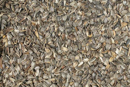 unprocessed: Dry unprocessed sunflower seeds with hulls; background