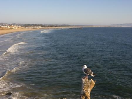 luis: Summer at Pismo Beach shores, San Luis Obispo County, California