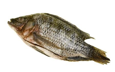 Fresh tilapia fish disemboweled; isolated on white background Stock fotó