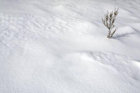 Dry frozen plant in cold white snow desert; Winter background Stock Photo - 8495164