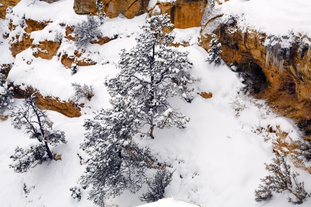Spruce covered with fresh snow in mountain canyon Stock Photo - 8530752