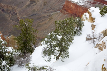 Bright snow and evergreen trees climbing steep slopes of Grand Canyon;, Mother Point, Arizona Stock Photo - 8530755