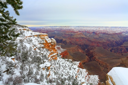 evergreen forest: Evergreen forest at  Grand Canyon in December, AZ Stock Photo