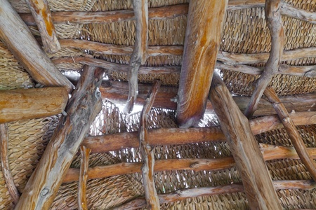 roof beam: Hawaiian hale shelter roof with fan palm thatch