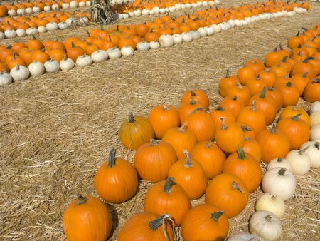 gourds: Pumpkins in hay at farmers market Stock Photo