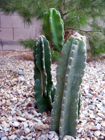 Desert garden in Spring with fleshy cacti Stok Fotoğraf - 14239704