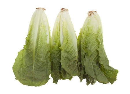 romaine: Three romaine hearts; isolated on white background