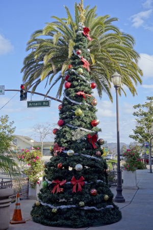 Christmas tree in front of King palm, distinctive Southern California holiday street in city of Camarillo Stock Photo