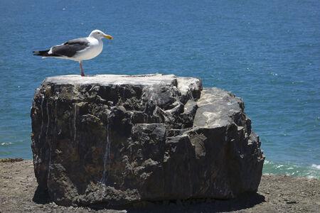 atop: Seagull atop a black rock near ocean cliff Stock Photo