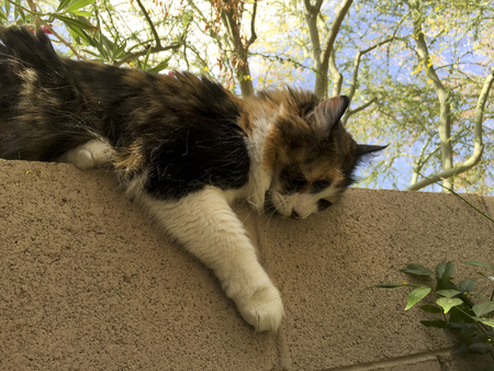 atop: Cat atop of garden fence napping after playful day in backyard Stock Photo